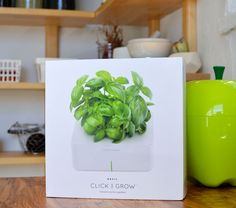 Click & Grow: I Planted My 1st Battery Powered Garden...I fancy myself a very caring cat owner (at least according to recent polling), an attentive betta fish owner with a good track record for long-lived aquatic companions, and an excellent housekeeper. But for the life of me, I can't seem to grow herbs...a minor annoyance to my inner-Martha.