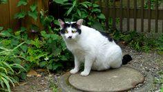 黒白猫(313) 猫写真-横浜  #猫写真