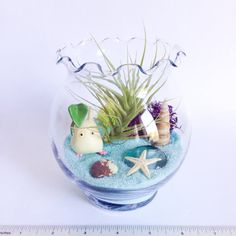 The Chibi Totoro Terrarium Kit includes a scalloped edge glass vessel, light blue craft sand, an Aeranthos Hybrid air plant, chartreuse and fuchsia