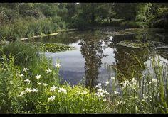Royal Botanic Gardens Ponds, Kew, London