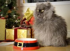 It's Hard to Be a Cat at Christmas -- The Bonus Musical Animal Video of the Day!!!  ... from PetsLady.com ... The FUN site for Animal Lovers
