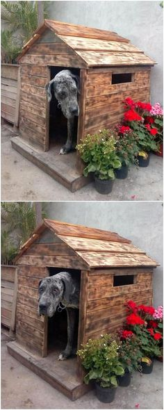 The garden design with wooden niche for wooden pallets is a unique idea that is now part of your home. If you want it to look much more impressive, you can sum it up with the iron work that seems so interesting. Pallet Dog House, Pallet Dog Beds, Dog House Bed, Wooden Pallet Table, Wooden Pallets, Pallet Wood, Diy Wood, Diy Pallet Projects, Wood Projects