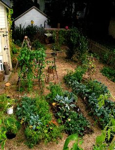 Lovely relaxed potager! #garden #potager #edible_gardening