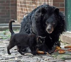 Stray Cat And An Elderly Bear Become BFF At Berlin's Zoo