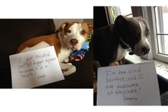 Dogshaming: Photo