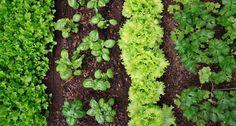 Anbauplanung im Gemüsegarten - Mein schöner Garten