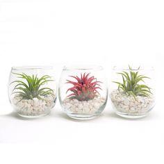 Fab.com | Glass Bulb Terrarium Trio