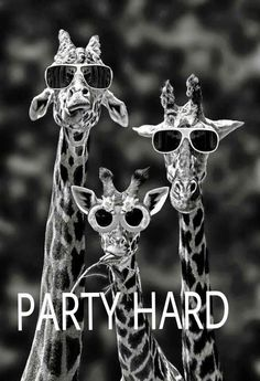 That photo always makes me laugh like hell! :D Party Hard. \m/