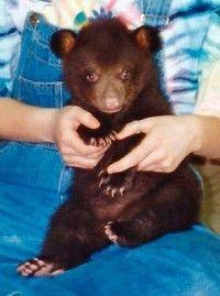 Honey as a cub