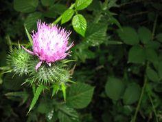 edible plants of arkansas