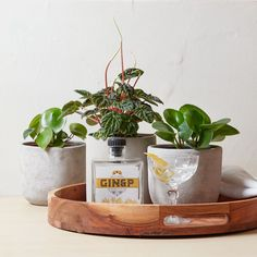 Perfect weather for a Peperomia party ☀️ Plant Care, Planter Pots, Tropical, Weather, Party, Parties, Weather Crafts