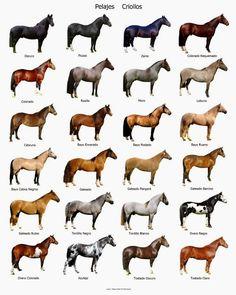pelajes-de-caballos-criollos_MLU-F-2771381362_062012