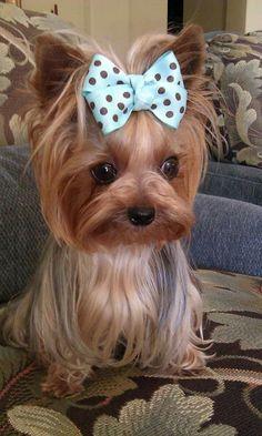 What a cutie!  :)