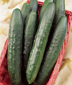 Find cucumber seeds with exceptional yields and excellent flavors available at Burpee. Shop for American and Asian cucumber seeds that are available in a variety of organic and hybrid strains and are perfect for any home garden in stock at Burpee. Farm Gardens, Small Gardens, Outdoor Gardens, Cucumber Seeds, Plant Information, Grow Your Own Food, Companion Planting, Gardening Tips, Vegetable Garden