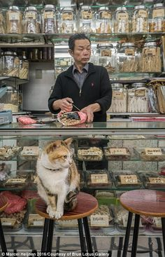 Hong Kong-based Dutch photographer Marcel Heijnen spent one year photographing the city's shop cats. His book captures the deep connection between store owners and their pets. Aesthetic Japan, Rainbow Aesthetic, City Aesthetic, Human Reference, Art Reference, Street Photography, Art Photography, Figure Drawing Practice, Hong Kong
