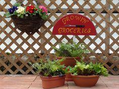 Lettuce bowls and Primrose.