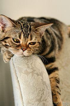 Katze-https://www.flickr.com/photos/kitty-cats-corner/1484413241/in/faves-melibusla/