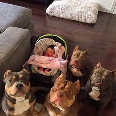 That's one hell of a protected kid - The only time my Pitt doesn't have a sense of humor... just try messing with his babies. He LOVES babies.