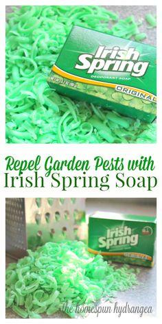 Ways to Repel Garden Pests