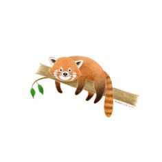 Original Art  Red Panda