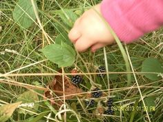 Exploring the natural world. The weather's been perfect for blackberry picking.