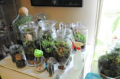 Terrariums are on my registry :)