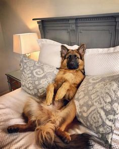 Wicked Training Your German Shepherd Dog Ideas. Mind Blowing Training Your German Shepherd Dog Ideas. Cute Dogs And Puppies, Baby Dogs, I Love Dogs, Pet Dogs, German Shepherd Training, German Shepherd Puppies, Baby German Shepherds, German Shepherd Pictures, Beautiful Dogs