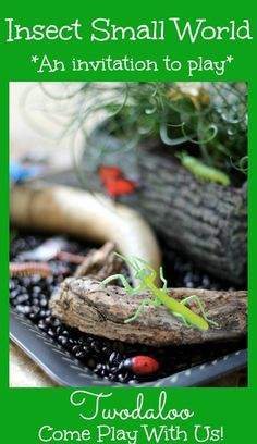 A fun insect small world from Twodaloo featuring natural items and coffee beans! Learn all about insects and their habitats through open-ended play.