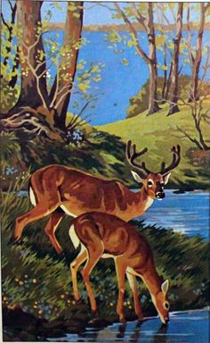 Ideas Vintage Landscape Art Paint By Number For 2019 Wildlife Paintings, Wildlife Art, Animal Paintings, Animal Drawings, Art Drawings, Watercolor Landscape Paintings, Landscape Art, Vintage Landscape, Deer Art