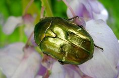 Beautiful Insects | HD Wallpapers Best