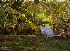 Fall has come IG: nemo_the_ragdoll