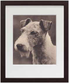 Fox Terrier book page framed photo illustration from TheAntiqueDog