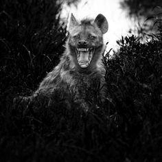 Y me vestí de hiena para ver si así te hacia sonreír.