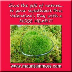 Moss For Sale, Moss Garden, Valentines, Gardening, Day, Gifts, Inspiration, Valentine's Day Diy, Biblical Inspiration