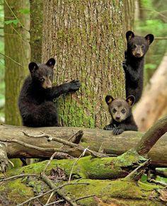 AdictaMente: Los osos se divierten