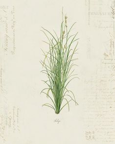 Antique Illustration, Paper Texture, Artwork Prints, Ephemera, Nature, French, Plants, Art Work, Vintage