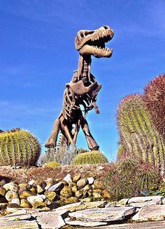 Museo del desierto - Saltillo, Coahuila México