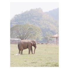 Elephant sanctuary on the Thai Island of Koh Yao Yai