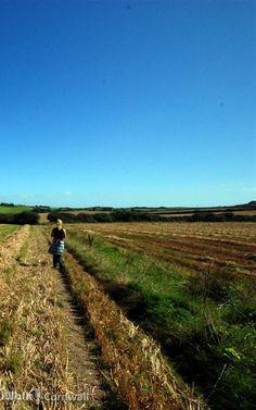 Field near Roserrow, Cornwall
