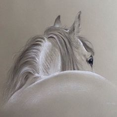 Horse in Pencil & White Chalk #richardmoore #artist #art #horse…