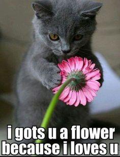 Got u a flower