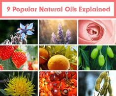 9 Popular Natural Oils Explained