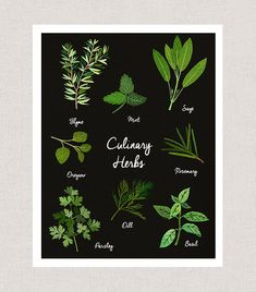 Herbs Culinary Art Print. A print of my digital collage created with vintage textures. Choose between four sizes, 5x7, 8x10, 11x14, and 11x17. Printed on an archival luster paper. --------------- Prints are placed in cello sleeves for protection and then shipped in a cardboard or