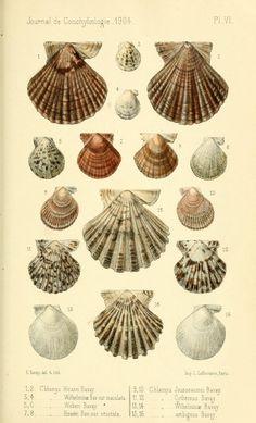 t 52 (1904) - Journal de conchyliologie. - Biodiversity Heritage Library