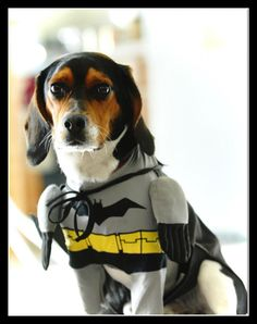 NEW Cat Dog Clothes Pet Coats Jacket Superman Batman Dogs Costume Autumn Winter Sweu2026 | dog things | Pinterest | Batman dog costume Pet clothes and Pet ... & NEW Cat Dog Clothes Pet Coats Jacket Superman Batman Dogs Costume ...