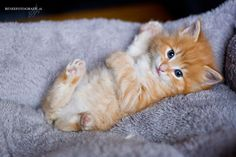 cute ginger kitty