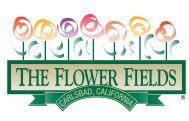 Carlsbad Flower Fields: The nearly fifty acres of Giant Tecolote Ranunculus flowers that make up The Flower Fields at Carlsbad Ranch in Carlsbad, California, are in bloom for approximately six to eight weeks each year – from early March through early May.