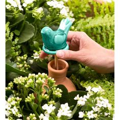 Small Olla Ceramic Irrigation Container | Collection Accessories