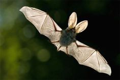 What an exquisite creature!  What a design of nature and all that it's equipped with. Unbelievable.