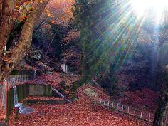 https://flic.kr/p/5Z6Z5c |  Στερεά Ελλάδα - Ευρυτανία - Λημέρι Δάσος στο Λημέρι Ευρυτανίας